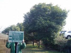 pruning201