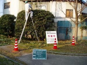 garden_tree02