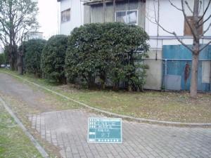 garden_tree03